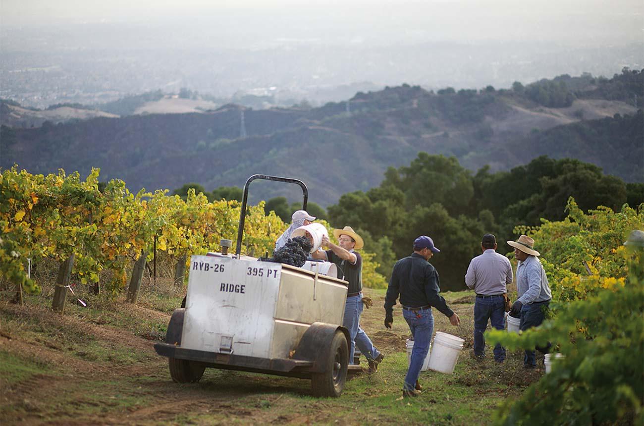 Investing in California wine: spotlight on prospects - Decanter