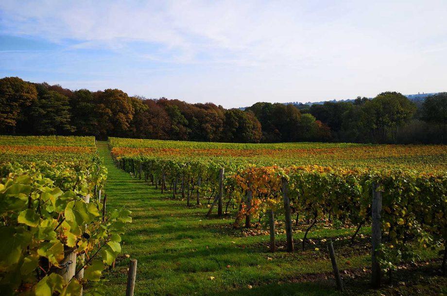 A view across the English vineyard at Church Farm