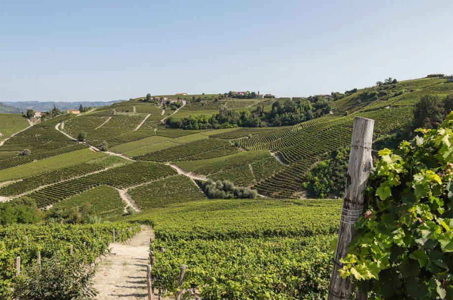 Asti vineyard