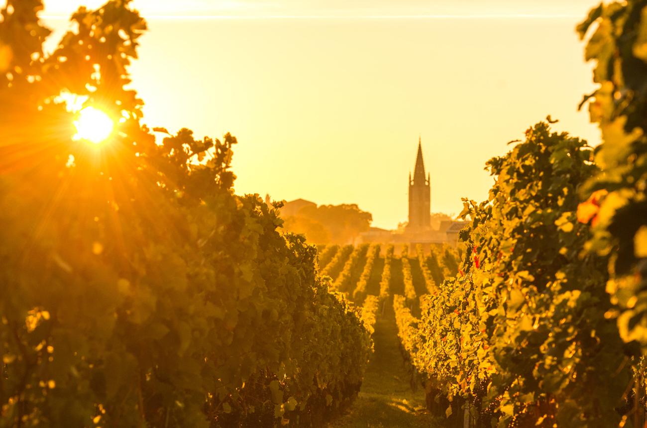 Best Bordeaux 2020 wines: top-scorers - Decanter