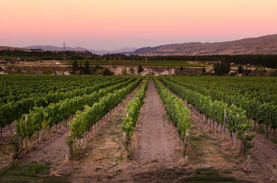 Vineyards in Central Otago