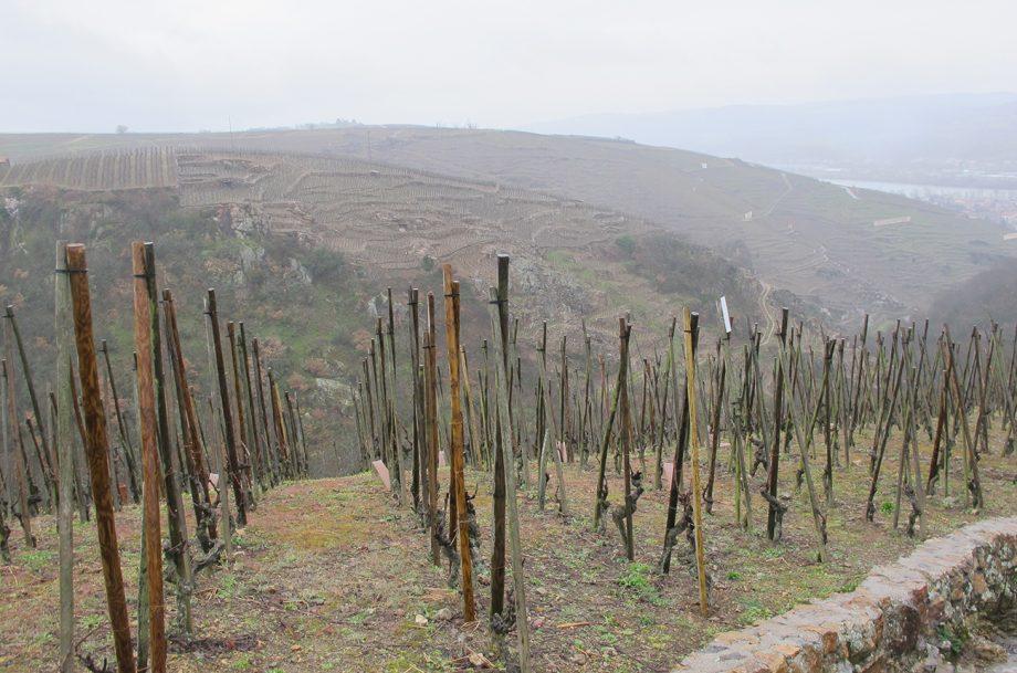 Steep slopes and terraced vineyards in Côte-Rôtie