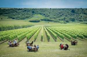 Rathfinny vineyard