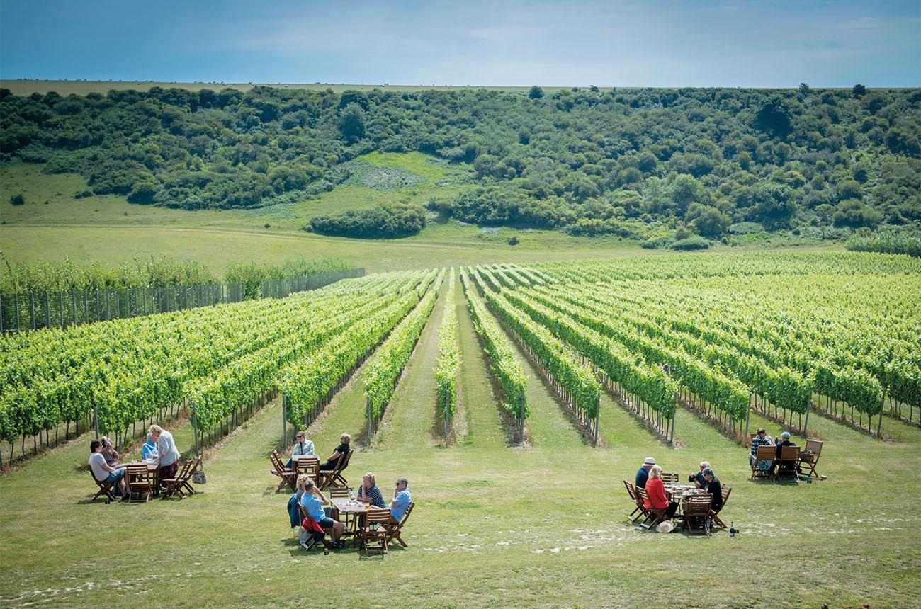 Best English vineyards to visit - Decanter