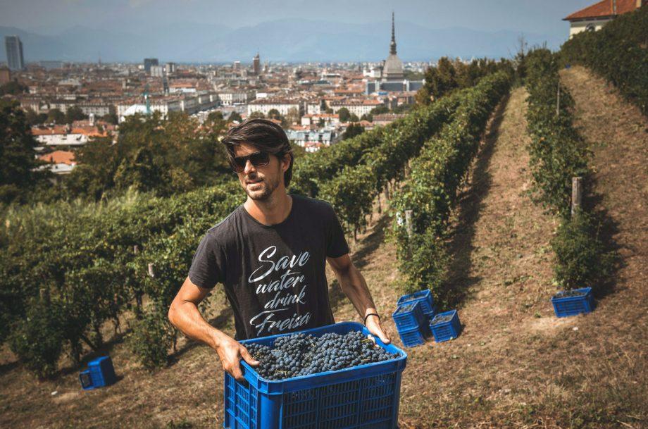 Luca Balbiano harvesting grapes overlooking Turin