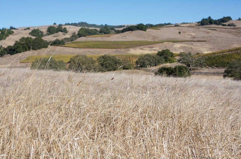 Dry conditions in Sonoma County in California have become a drought emergency in 2021