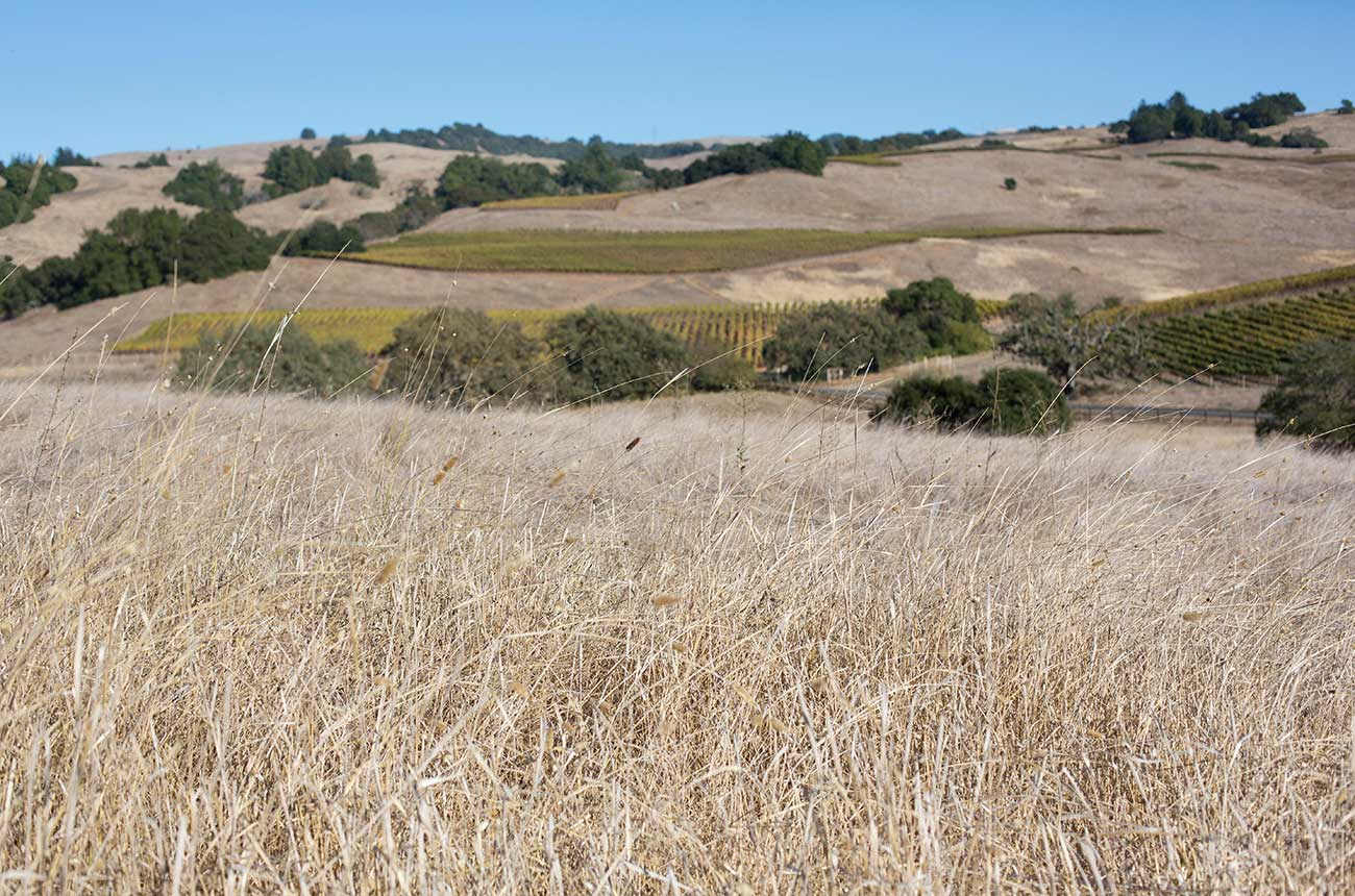 Wineries concerned as California drought emergency grows - Decanter