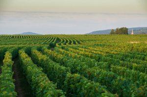 Bourgogne Cote d'Or