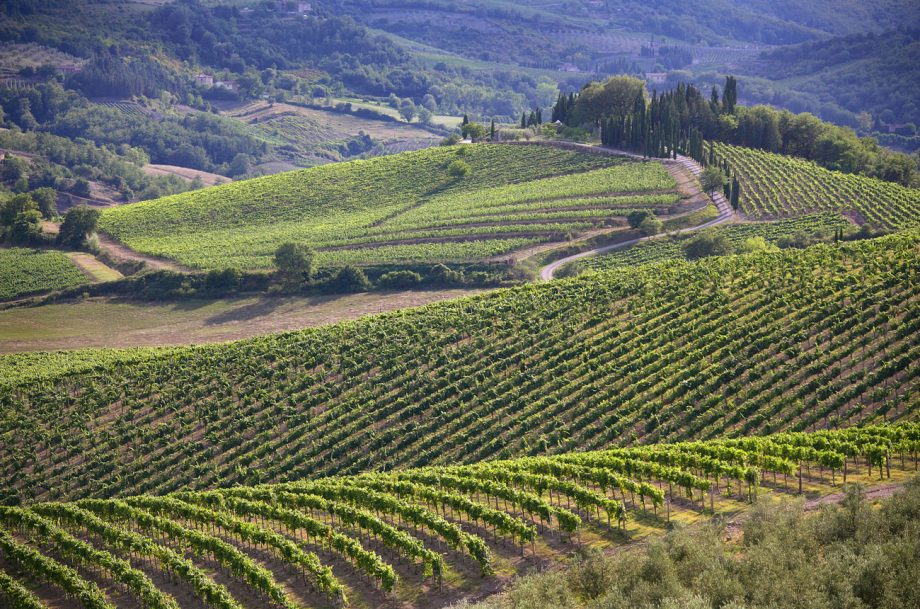 The Chianti Classico landscape, which is being divided into 'UGAs', or subzones.