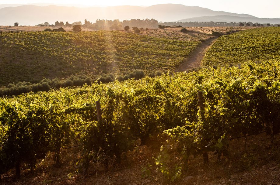 Ferruccio Deiana vineyards