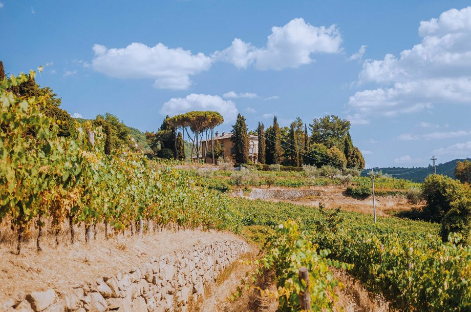 Italy's high-altitude wines