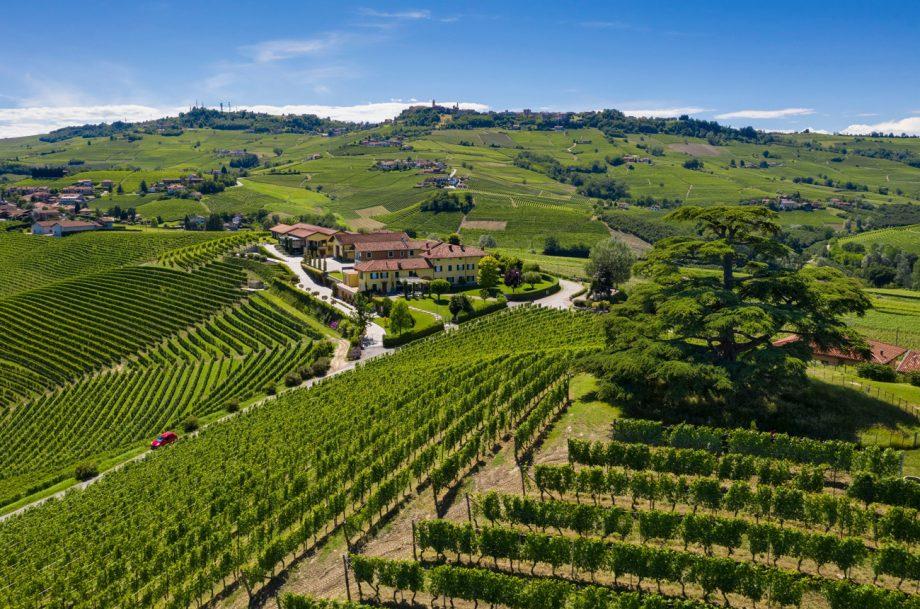 Piedmont wine vintage guide