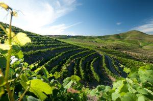 Portuguese icon wines