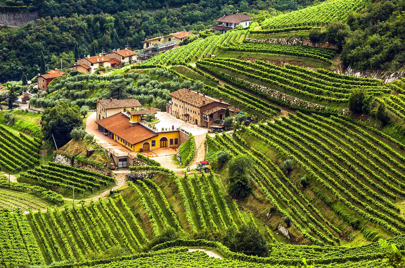 What is Valpolicella wine? - Ask Decanter - Decanter