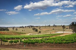 Vineyards in Hunter Valley, New South Wales, could be among the beneficiaries of a UK Australia trade deal