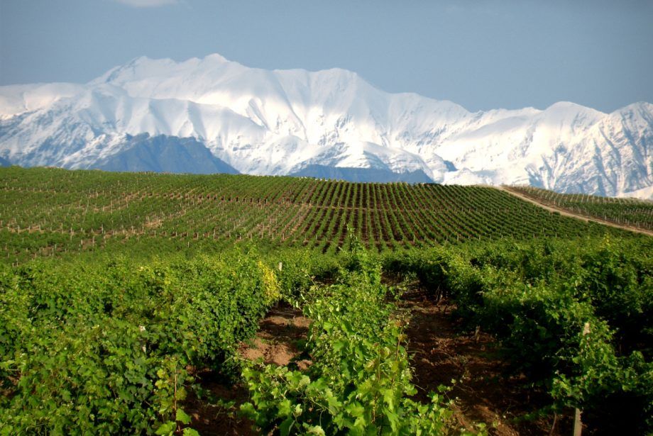 wines from Azerbaijan