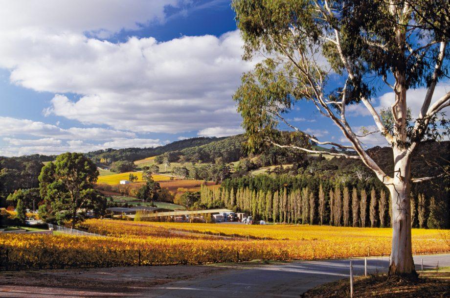Adelaide Hills: Tapanappa winery and vineyards