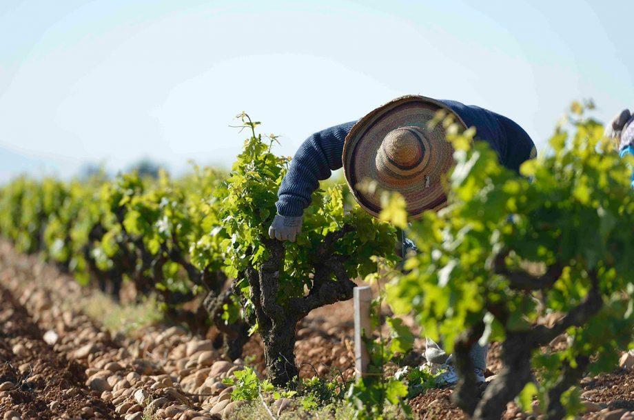 Southern Rhône white wines