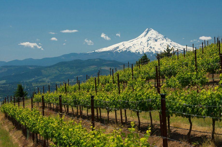 Washington 2018 red wines