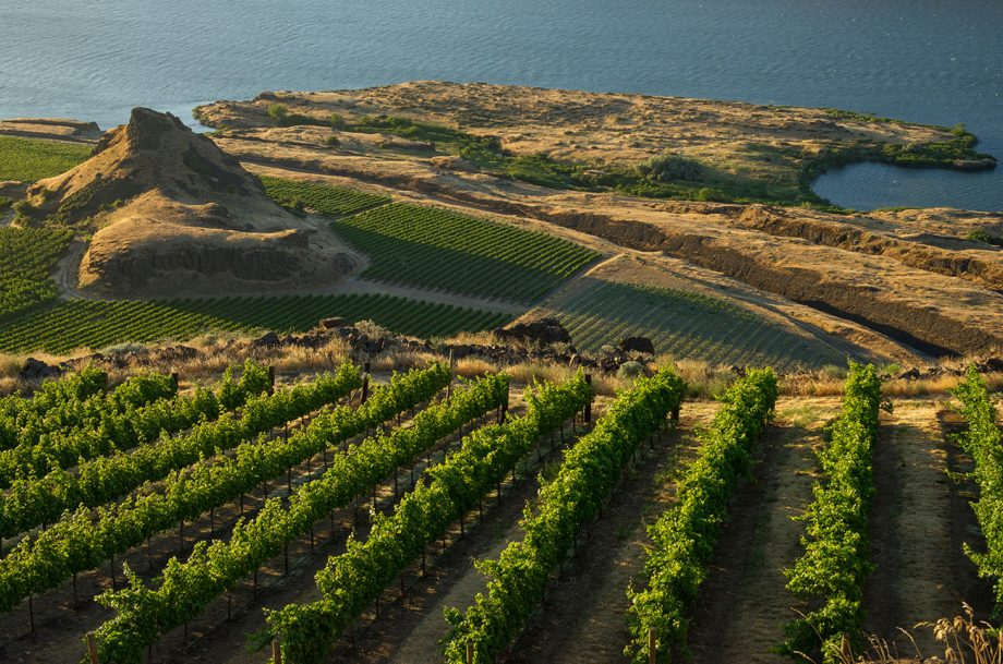 Columbia Valley 2018 red wines