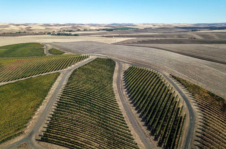 Walla Walla Valley 2018 red wines
