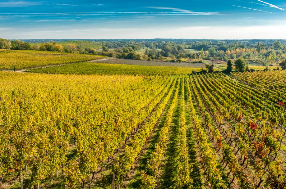 Fronsac wines