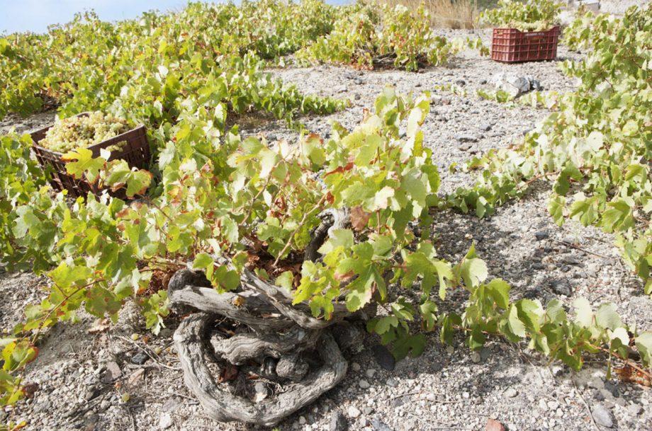 Santo-Wines, Santorini