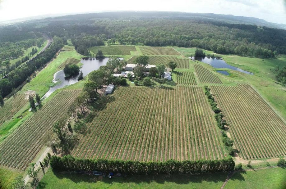 Hunter Valley property David Hook Wines, which has been listed for sale.