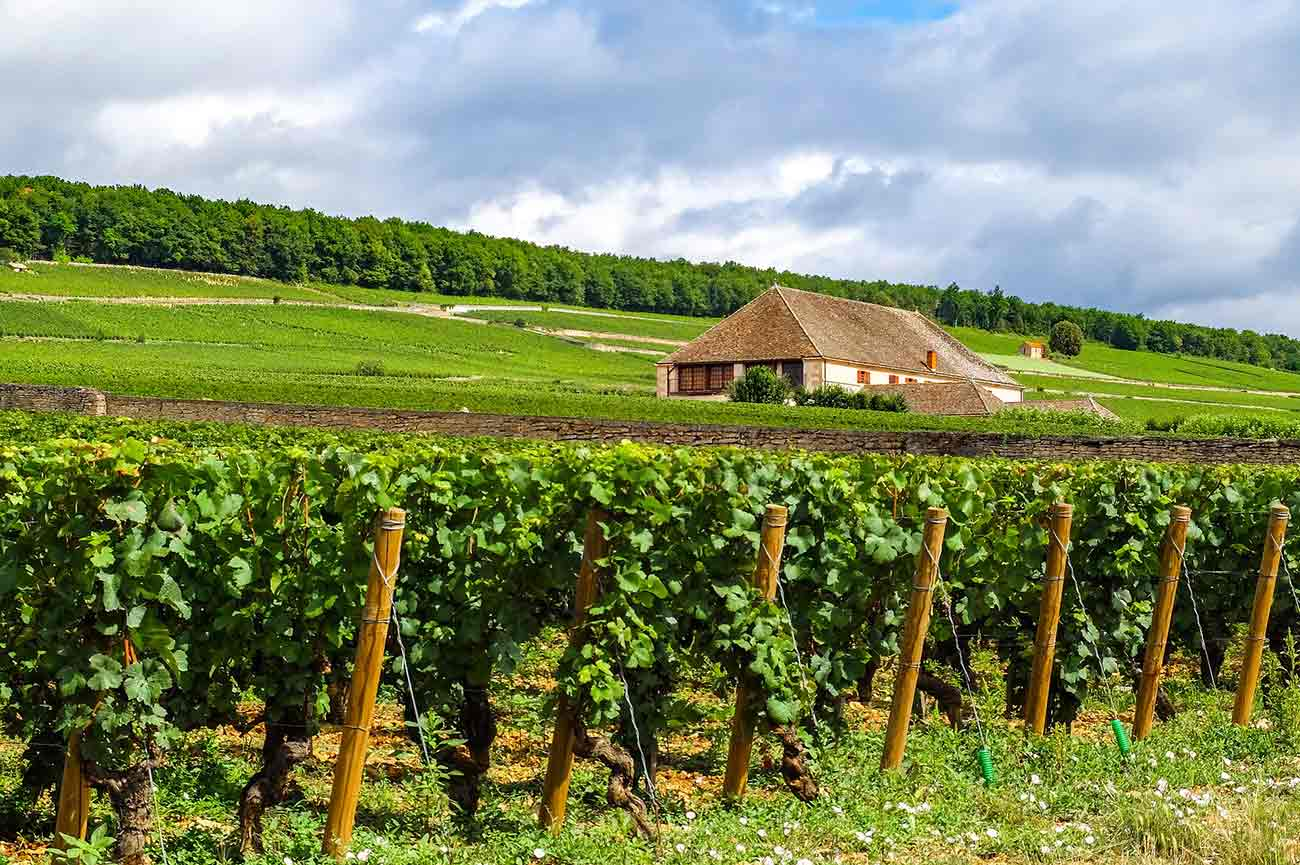 Back roads of Burgundy, part 1: the Côte de Beaune - Decanter