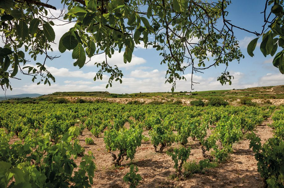 Bodegas Muriel vineyards