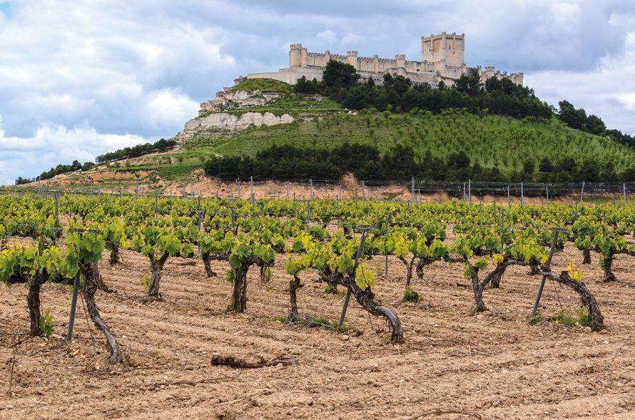 Castilla y Leon vineyards