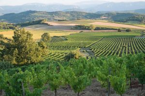Vineyards to the south of Limoux, not far from where Aigle Royal Chardonnay is made.