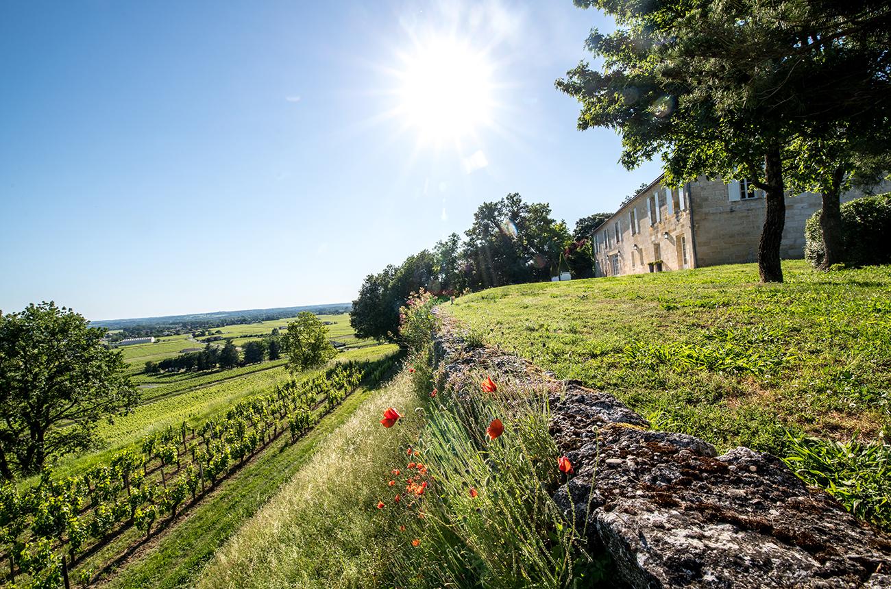 Château Quintus acquires Château Grand-Pontet in St-Emilion