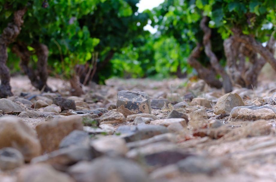 Spanish Wine Academy terroir