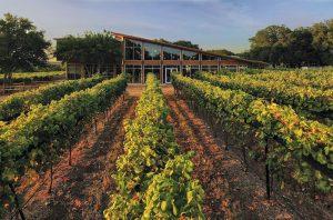 texas wine travel guide william chris vineyards