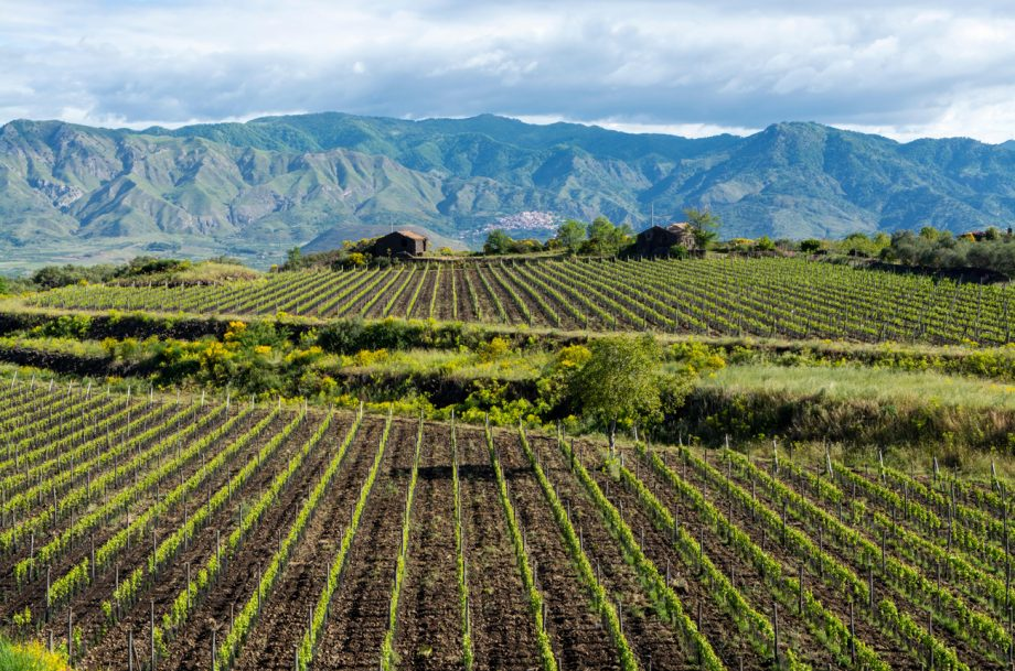 Vineyards near Mount Etna
