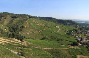 Cornas wine estates