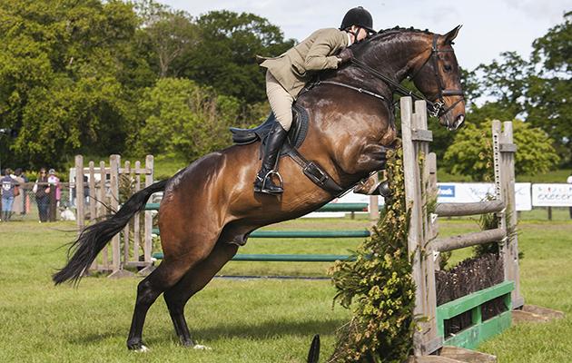 Horse shows in Devon County Show: 122 Harley Foxtrot&Libby Cooke - Cuddy Working Hunter winner