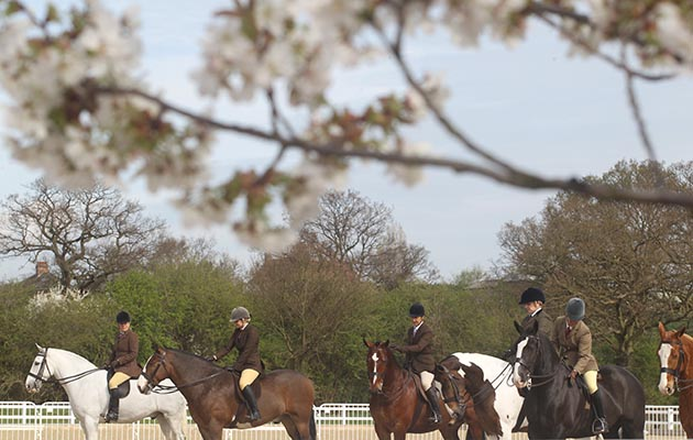 Horse shows in Essex: Brook Farm Spring Show 2014. line up