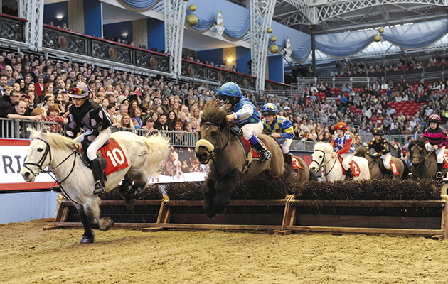Horse shows in London: Shetland Pony Grand National at Olympia