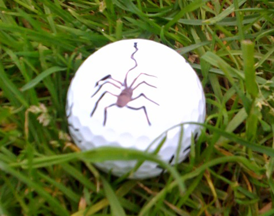 Ian Elderbrant, Sharpie golf ball marker competition