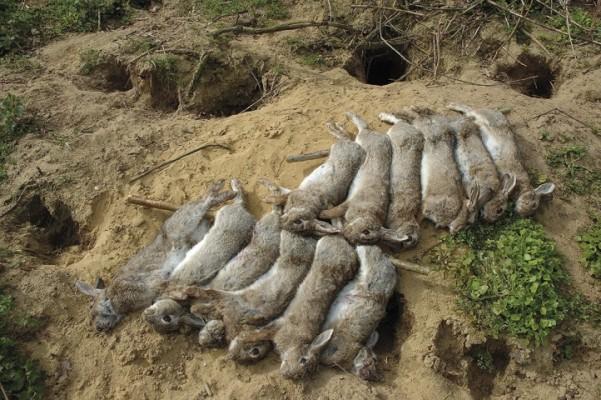 july07SA-rabbits-1