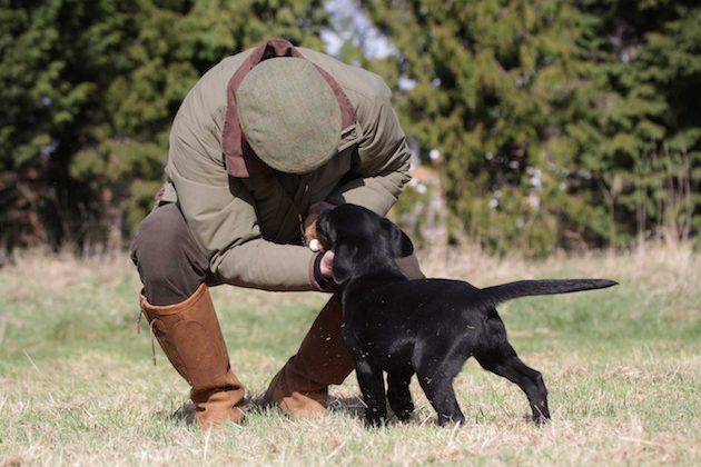 Why 'play-training' is crucial for gundog puppies