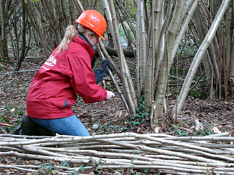 Lucy coppicing trees for the kiln.