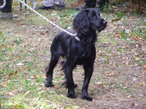 Dog Training Forums Uk