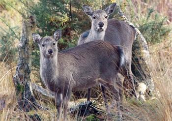 Deer salt licks in maryland