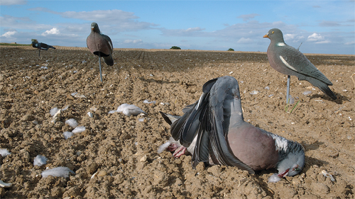 pigeon shooting decoys on drillings