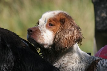 When Should A Dog Have His Health Tests Uk