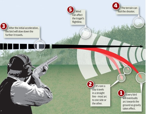 clay shooting - read the target