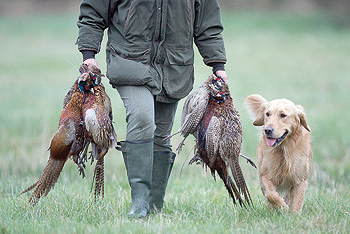 Gun Dog Training Warwickshire